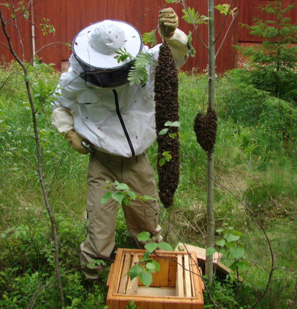 Biodiversity at Fru Gran in Tiveden - B&B and holidya accomodation