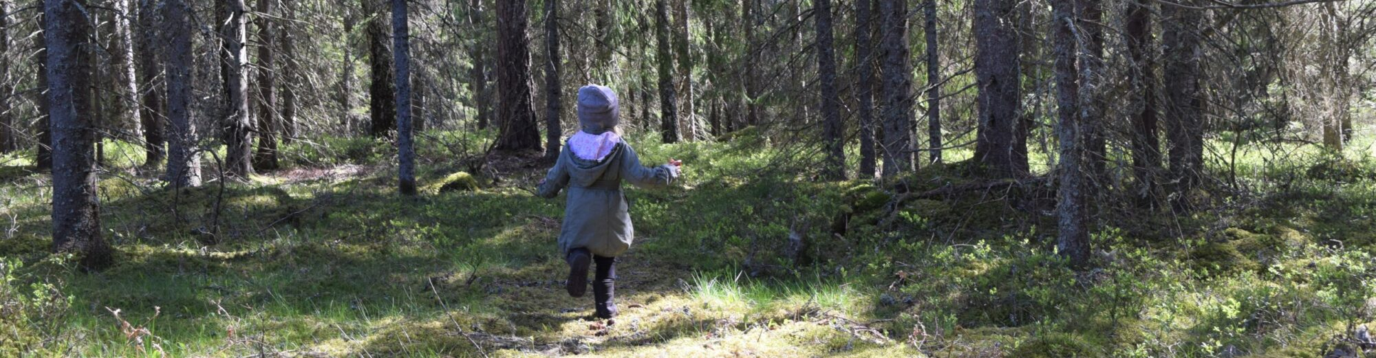 Ekologiska Fru Gran i Tiveden
